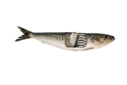 VSP - FISHY BOI